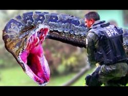 Титанобоа: Самая большая змея в истории