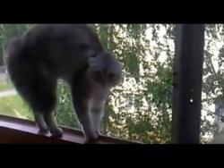 Моя говорящая кошка / My talking cat