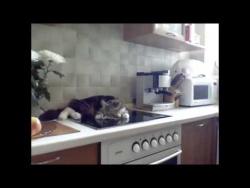Невоспитанный кот перечит хозяйке
