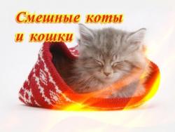 Смешные коты и кошки Позитив Создай себе хорошее настроение