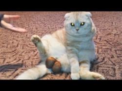 СМЕШНЫЕ ЖИВОТНЫЕ 2018 Лучшие Приколы с Животными ПРИКОЛЫ с Котами и Собаками ПОПРОБУЙ НЕ ЗАСМЕЯТЬСЯ