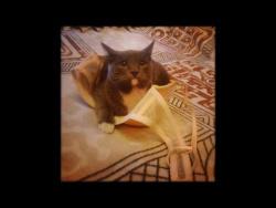 Коты маньяки /Cats maniacs
