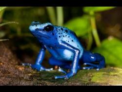 Невероятно опасные животные мира. Амазония