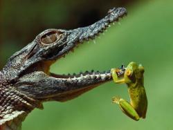 Самые Опасные Животные . Амазония ( Документальный Фильм National Geographic )