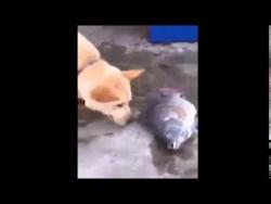Самая добрая собака спасатель