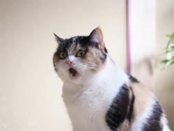 Кошки: Люди  где то рядом