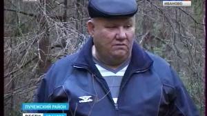 Незаконная вырубка леса в Пучежском районе