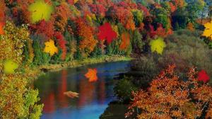 Осень - это сны листопада – Смотреть видео онлайн в Моем Мире.