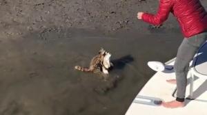 Енот украл улов