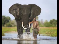 Тайная Жизнь Слонов . Документальный Фильм BBC