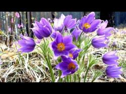 Весна  Весна!    Весеннее дыхание... Релакс.
