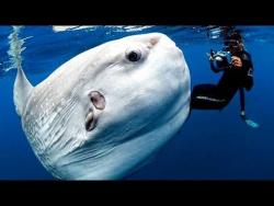 Самые Странные в Мире Животные. Чудаки в Океане