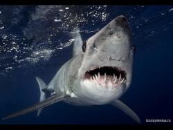 Самые Опасные Животные . Морские Глубины