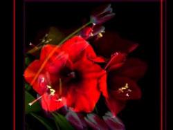 Чарующие цветы от фотографа Магды Индиго