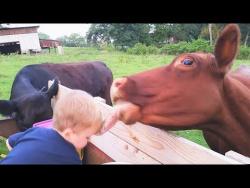 Лучшие Приколы 2017 НОЯБРЬ | Подборка приколов с животными | Самые смешные видео за неделю