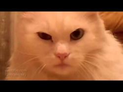 Кот морально убил хозяина(Thriller)