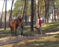 Вы такого еще точно не видели! Собака + лошадь = ?