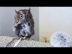 Попугаи и милые птицы  Смешные видео приколы про птиц  Cute Birds