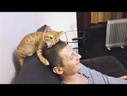 Приколы с кошками и котами  Подборка смешных видео с котиками и кошечками Кошкина любовь
