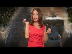 Все как у зверей - Женские секреты приматов: 8 марта, скрытая овуляция, инверсия доминирования