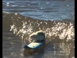 Житель австралийского Голд-Коста Шейн Уиллмот научил своих домашних мышей кататься на скейтбордах.