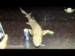 В одном из вагонов поезда метро в Нью-Йорке обнаружили мертвую акулу.