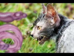Кот-ОБОРОТЕНЬ и другие УЖАСНЫЕ ЖИВОТНЫЕ