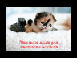 Приемная мама для маленького котенка / Foster mother for a kitten