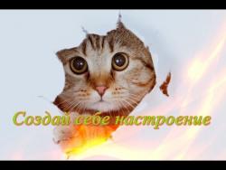 Самые смешные животные видео.Прикольные видео для детей  Fanny animals  Создай себе настроение