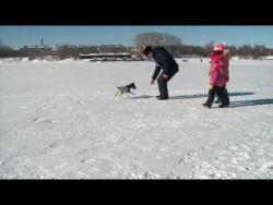 Собака - друг рыбака