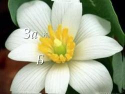 Молитва Благодарности к Природе (5.08)
