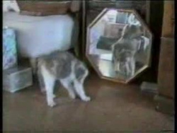 Funny Cats. Видеоприколы кошки