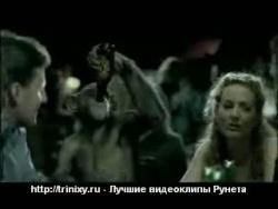 Животные и алкоголь - 5