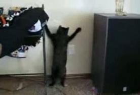 Кот и лазерное пятно