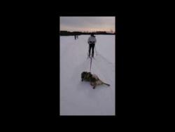 Ленивый лыжник