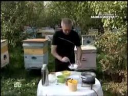 Подделка мёда. Как отличить настоящий мёд от фальсифицированного?