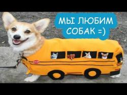 Собаки кот и кошки | приколы 2017 про животных | домашние животные|we love dogs|Funny Cats And Dogs