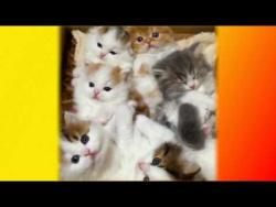 Самые смешные видео с котятами, кошками для детей Создай себе хорошее настроение