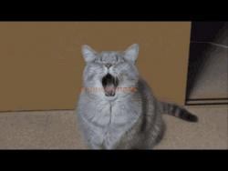 Смешные кошки., Улыбнитесь