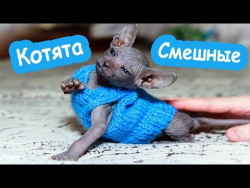 Забавные кошки и котята ЛУЧШИЕ Приколы 2017 АПРЕЛЬ Сборник про животных смешные коты котики котята