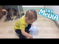 Смешные МОМЕНТЫ из мира животных коты кошки и дети милые и позитивные новый выпуск от 20.05.2017