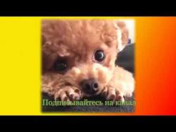 Забавные животные приколы видео Создай себе хорошее настроение
