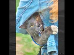 у кошки четыре ноги.wmv