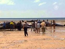 Туши 7 кашалотов нашли на берегу в Австралии (новости)