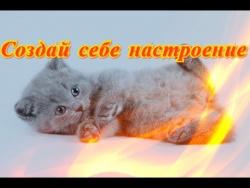 Смешные прикольные кошки собаки Позитив Для детей и не толькоСоздай себе хорошее настроение