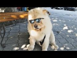 ЛУЧШИЕ ПРИКОЛЫ НОЯБРЬ 2017 | Смешные животные в очках | Чумовая Подборка Приколов про животных