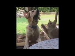 Кот, пес и картошка фри. Приколы с котами.