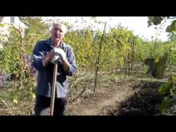 Виноградник в октябре.