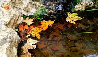 Яркие пятна, оставленные осенью нам на память (+ 4 снимка)