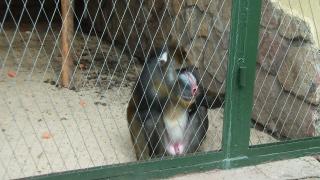 зоопарк 037